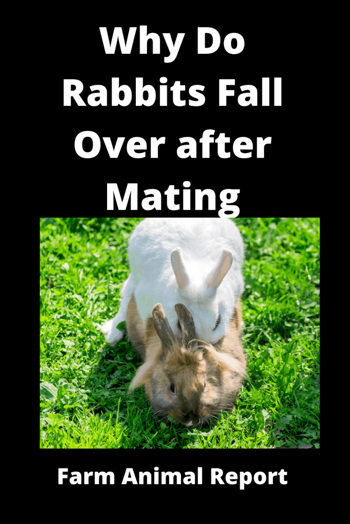 Why Do Rabbits Fall Over after Mating - 2 Videos / 4 Charts 1