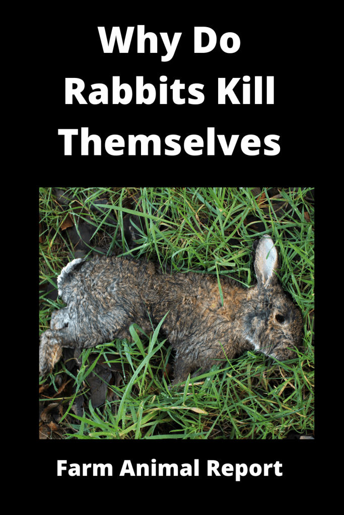 Why Do Rabbits Kill Themselves / 19 Reasons 1