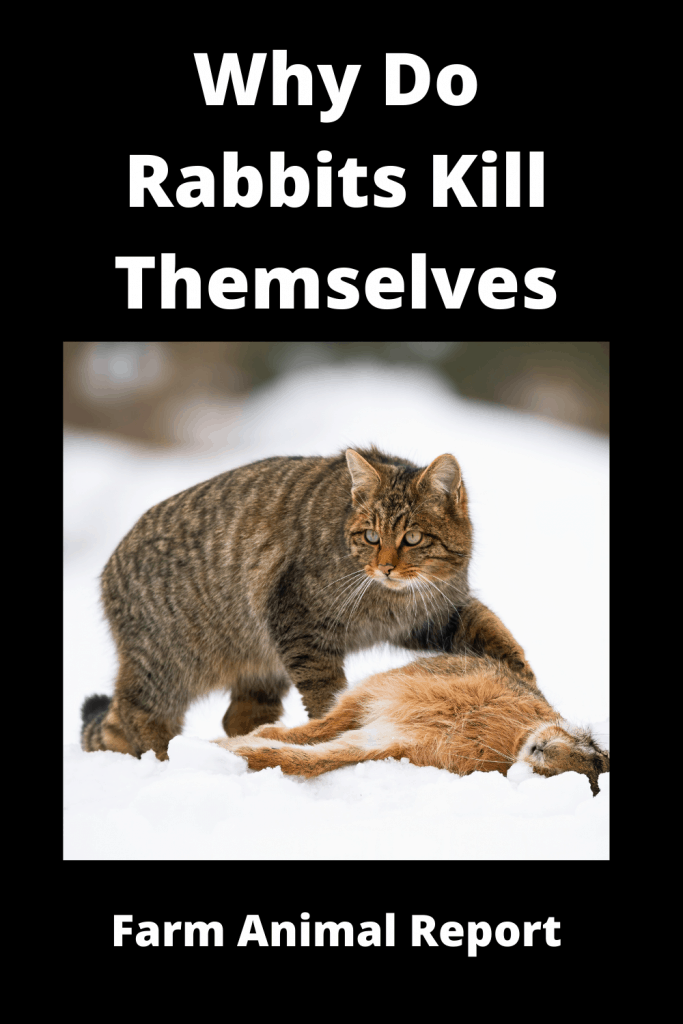Why Do Rabbits Kill Themselves / 19 Reasons 4