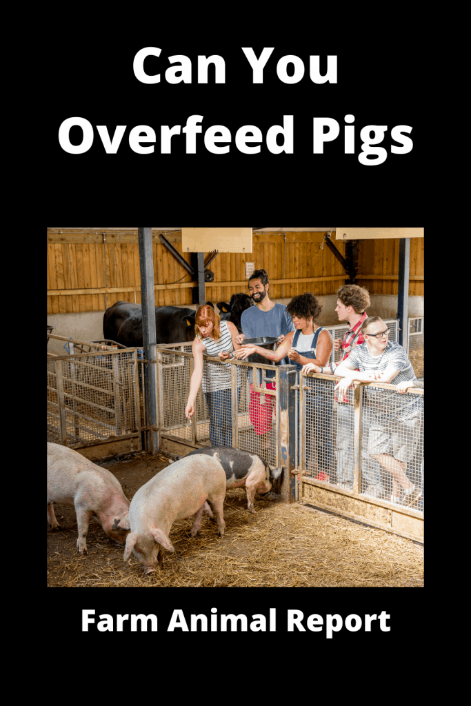 Can You Overfeed Pigs - Video Proof 4