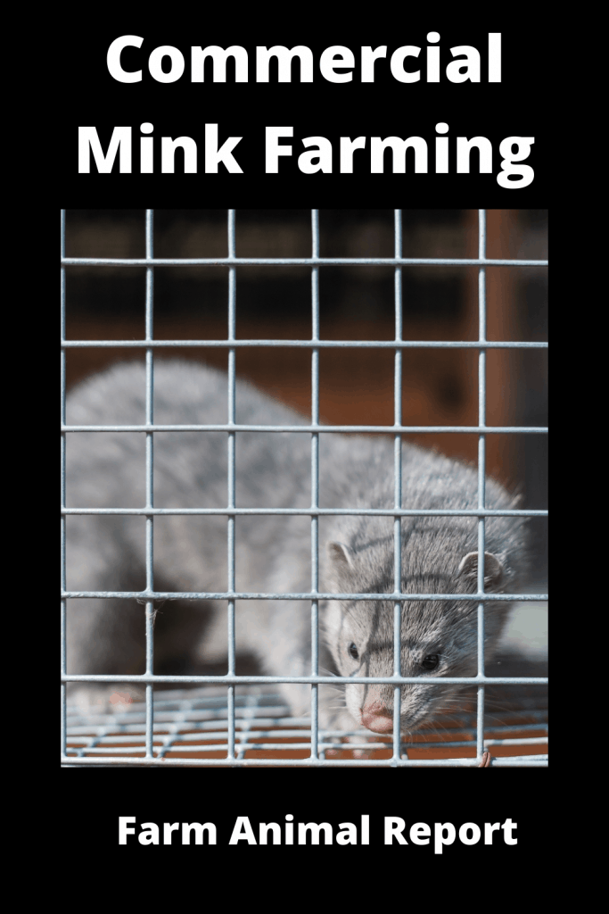 Ultimate Guide Commercial Mink Farming 3