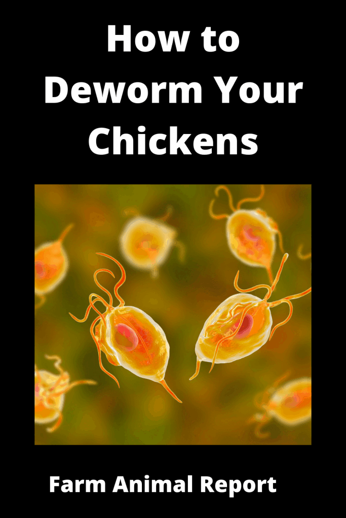 How to Deworm Your Chickens (With 5 Videos) 5