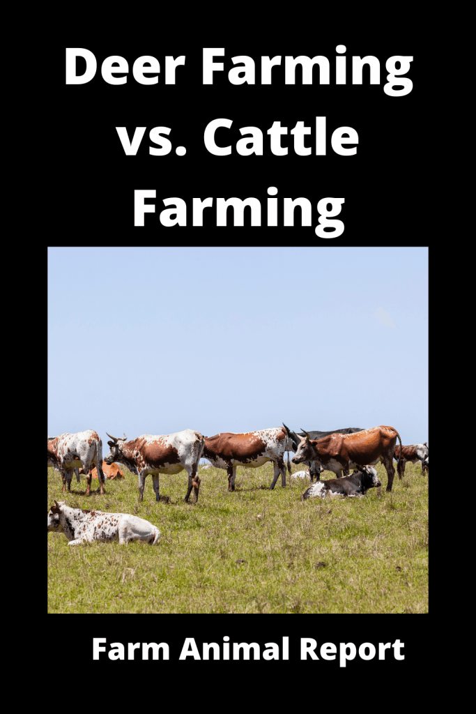 Deer Farming vs. Cattle Farming: The Similarities and Differences 2