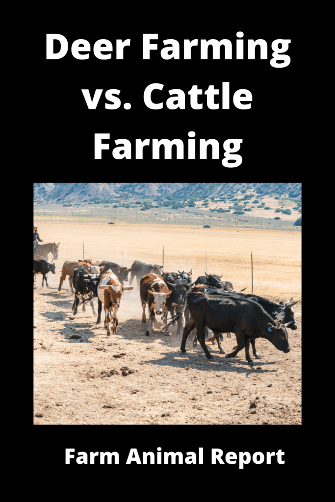 Deer Farming vs. Cattle Farming: The Similarities and Differences 3