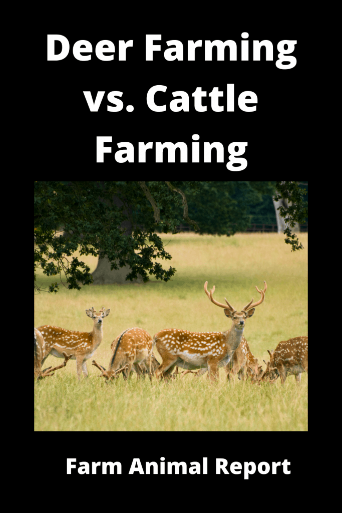 Deer Farming vs. Cattle Farming: The Similarities and Differences 1