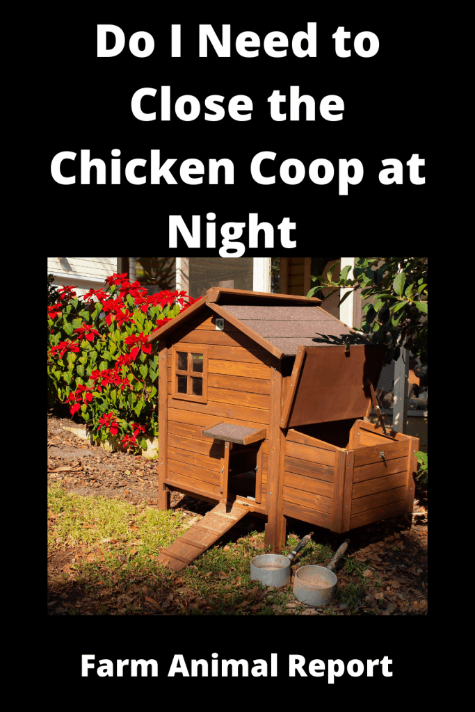 Do I Need to Close the Chicken Coop at Night (with Videos) 1