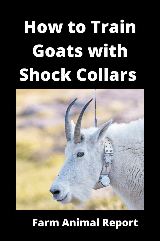 How to Train Goats with Shock Collars - Invisible Fence 1
