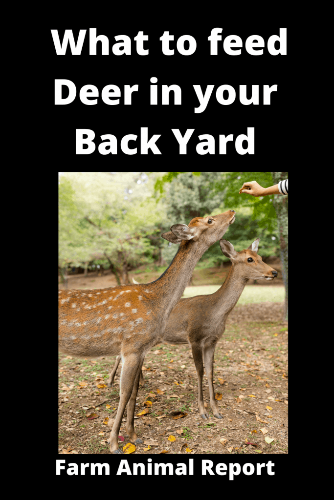 What to feed Deer in your Back Yard 3