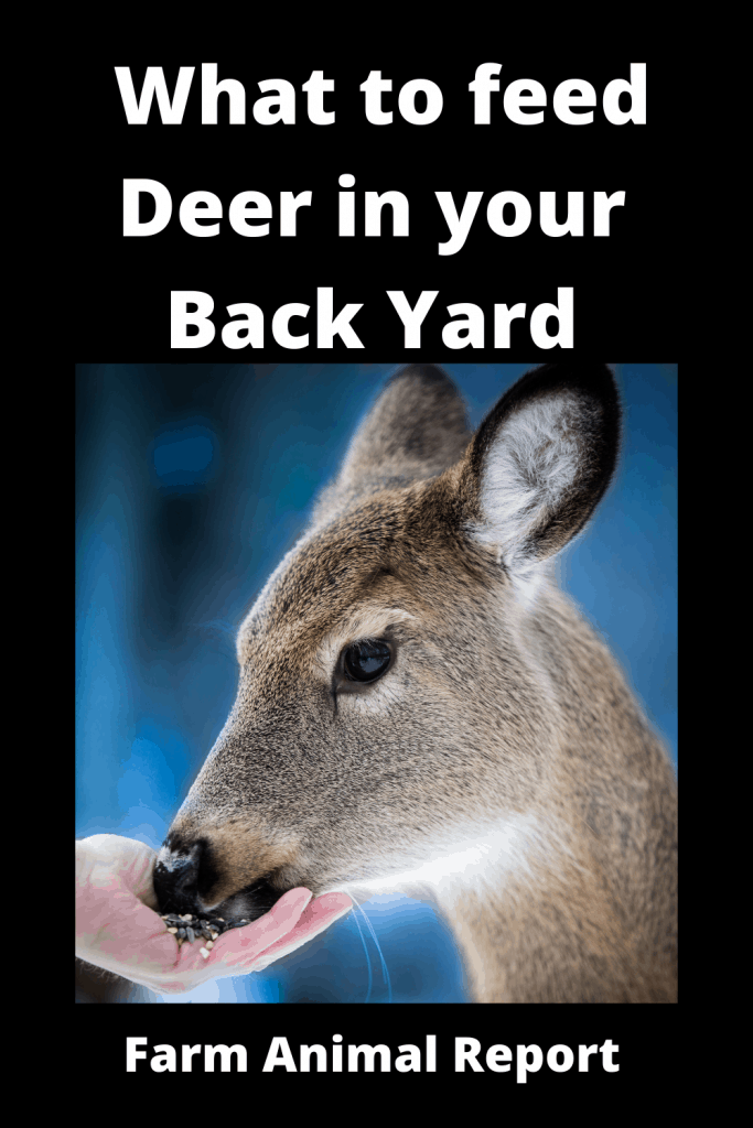 What to feed Deer in your Back Yard 1