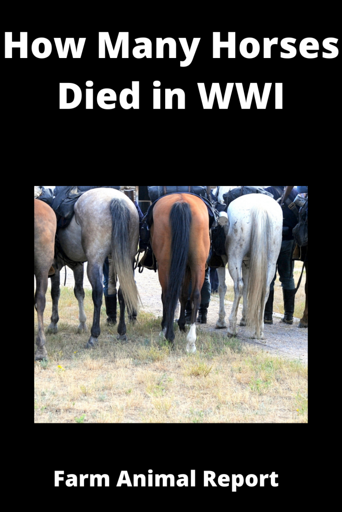 How Many Horses Died in WWI 2