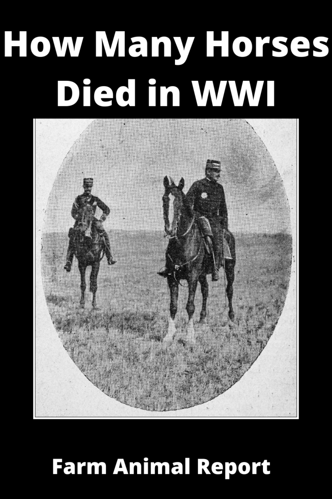 How Many Horses Died in WWI 3