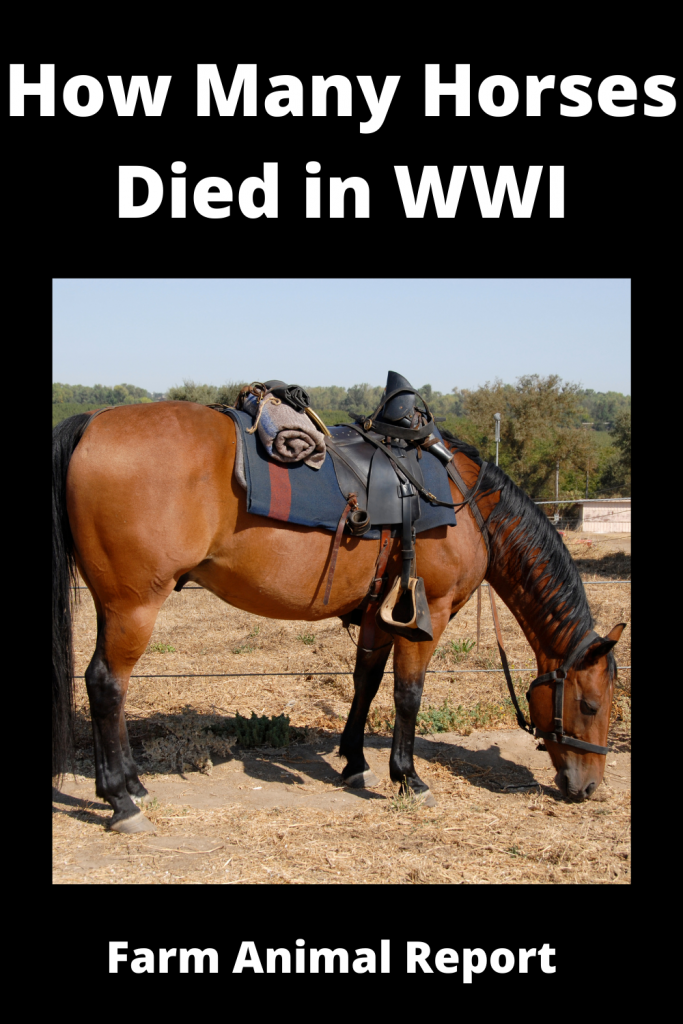 How Many Horses Died in WWI 1