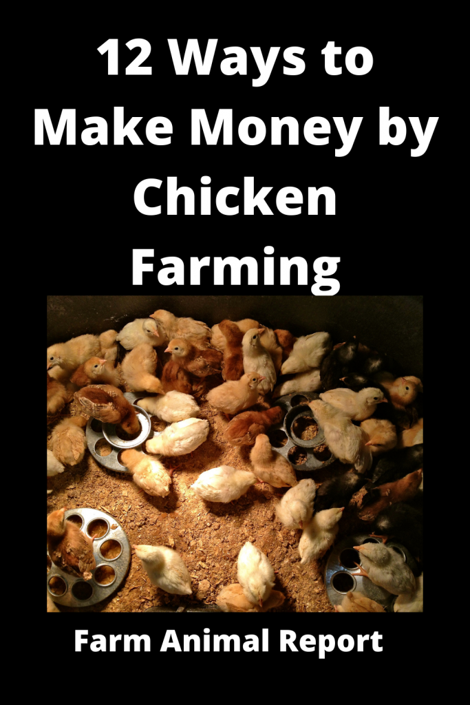 12 Ways to Make Money by Chicken Farming—Extensive Guidelines for Chicken Farmers 1