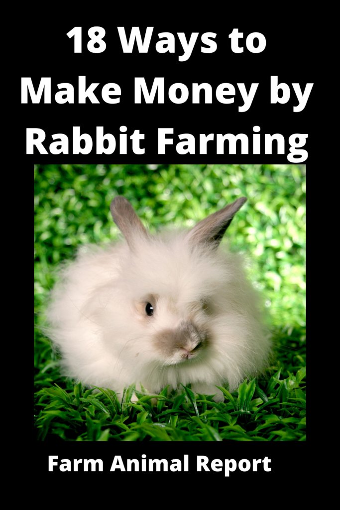 18 Ways to Make Money by Rabbit Farming—Extensive Guidelines for Rabbit Farmers 2