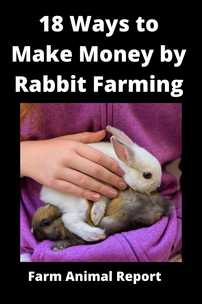 18 Ways to Make Money by Rabbit Farming—Extensive Guidelines for Rabbit Farmers 3