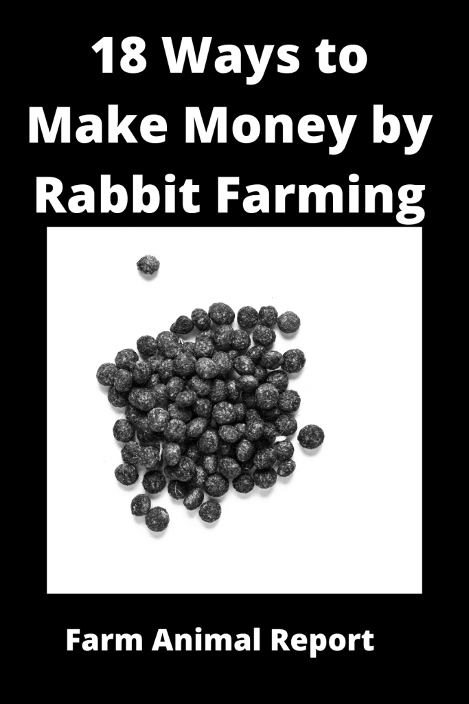 18 Ways to Make Money by Rabbit Farming—Extensive Guidelines for Rabbit Farmers 4