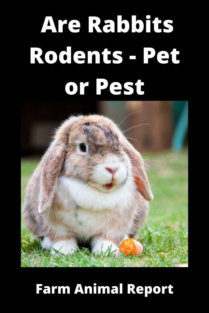 Are Rabbits Rodents - Pet or Pest 2