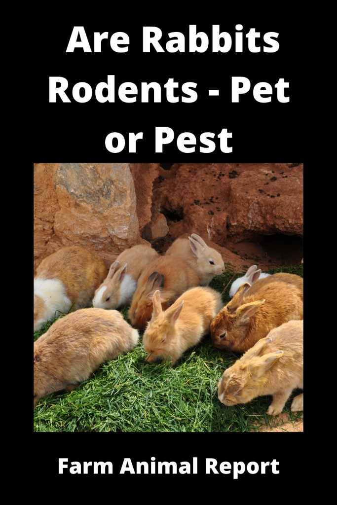 Are Rabbits Rodents - Pet or Pest 3