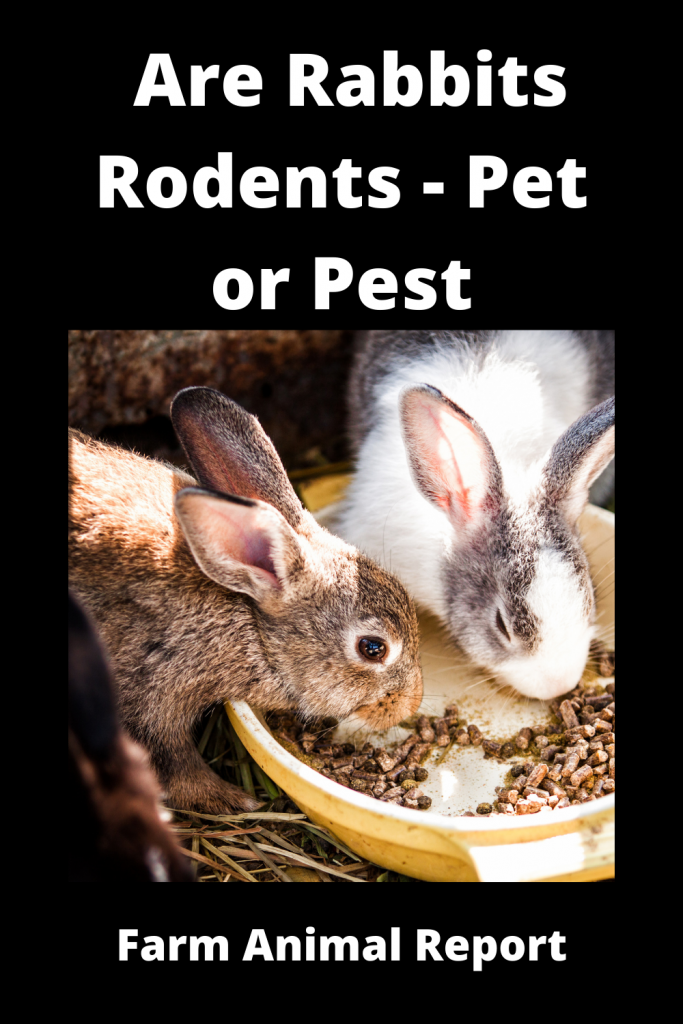 Are Rabbits Rodents - Pet or Pest 4