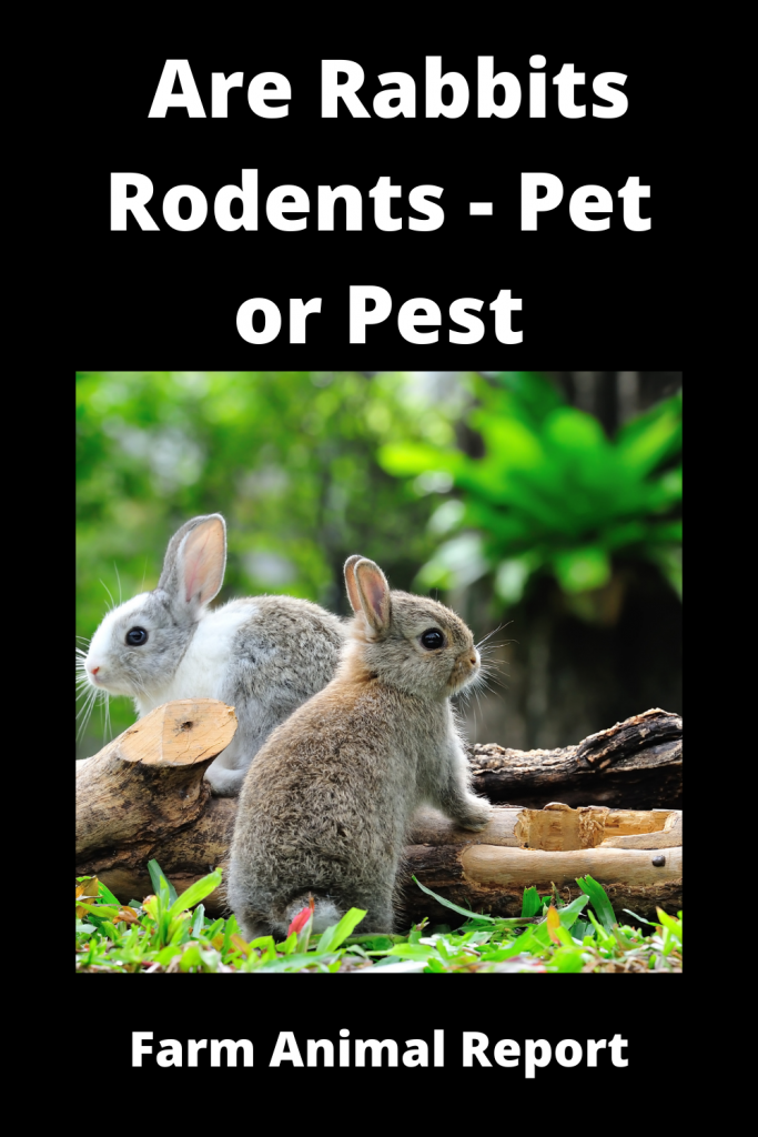Are Rabbits Rodents - Pet or Pest 1