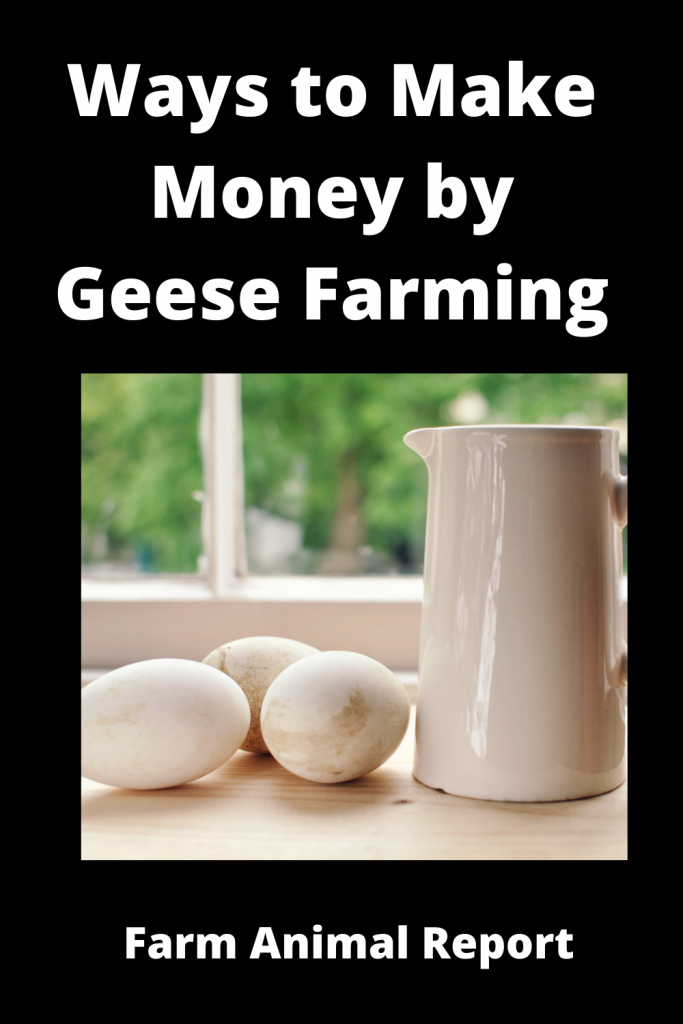 12 Ways to Make Money by Geese Farming—Extensive Guidelines for Geese Farmers 2