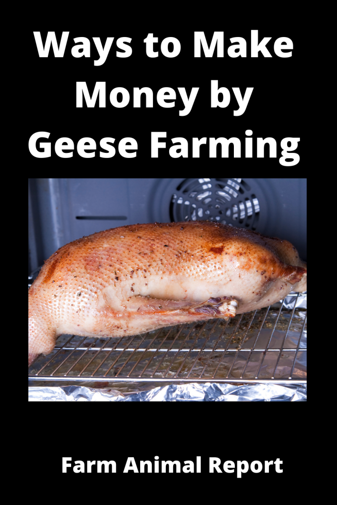 12 Ways to Make Money by Geese Farming—Extensive Guidelines for Geese Farmers 3