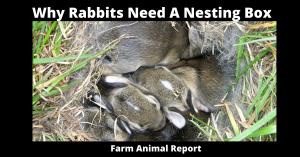 Why Rabbits Need A Nesting Box