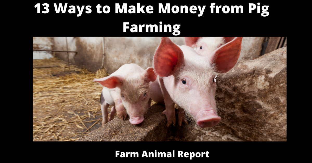 13 Ways to Make Money from Pig Farming