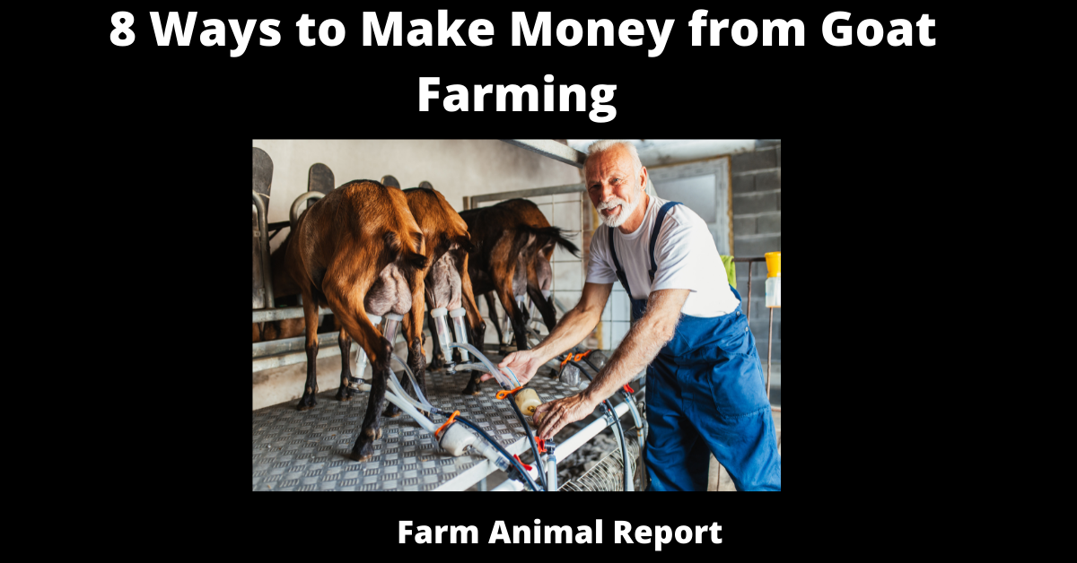 8 Ways to Make Money from Goat Farming
