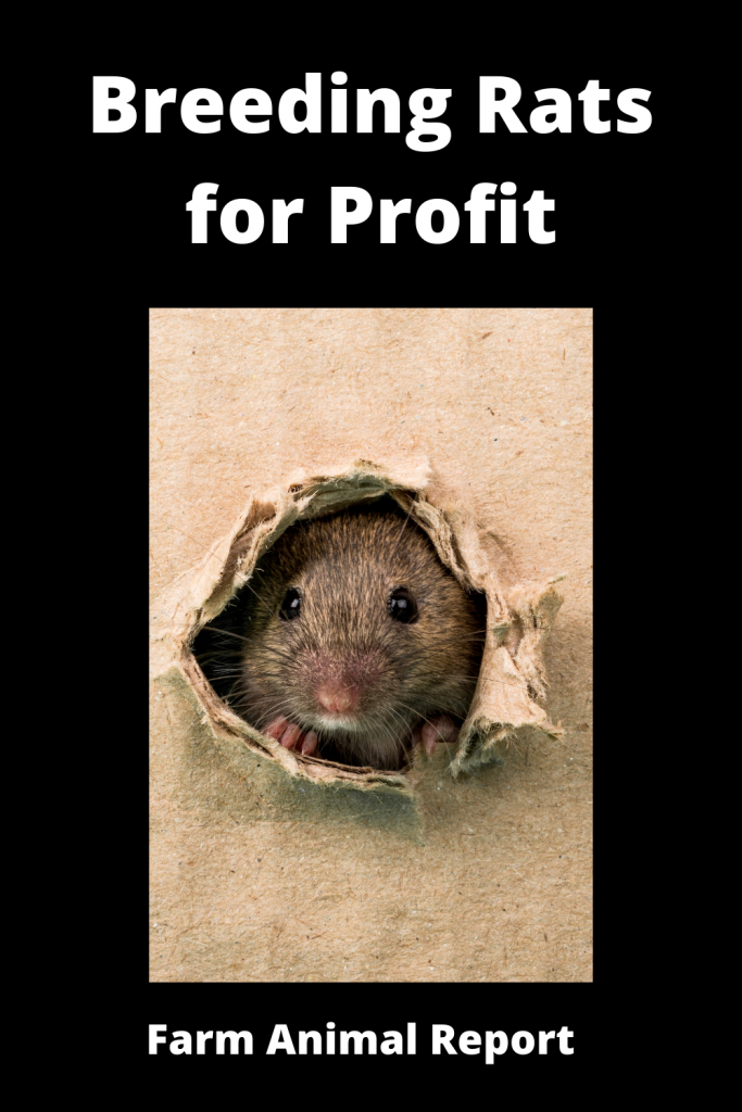 Breeding Rats for Profit - 2 = $15,000 One Year 1