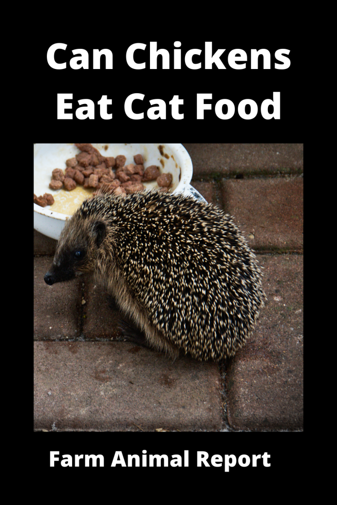 Can Chickens Eat Cat Food? Is it Safe? 1