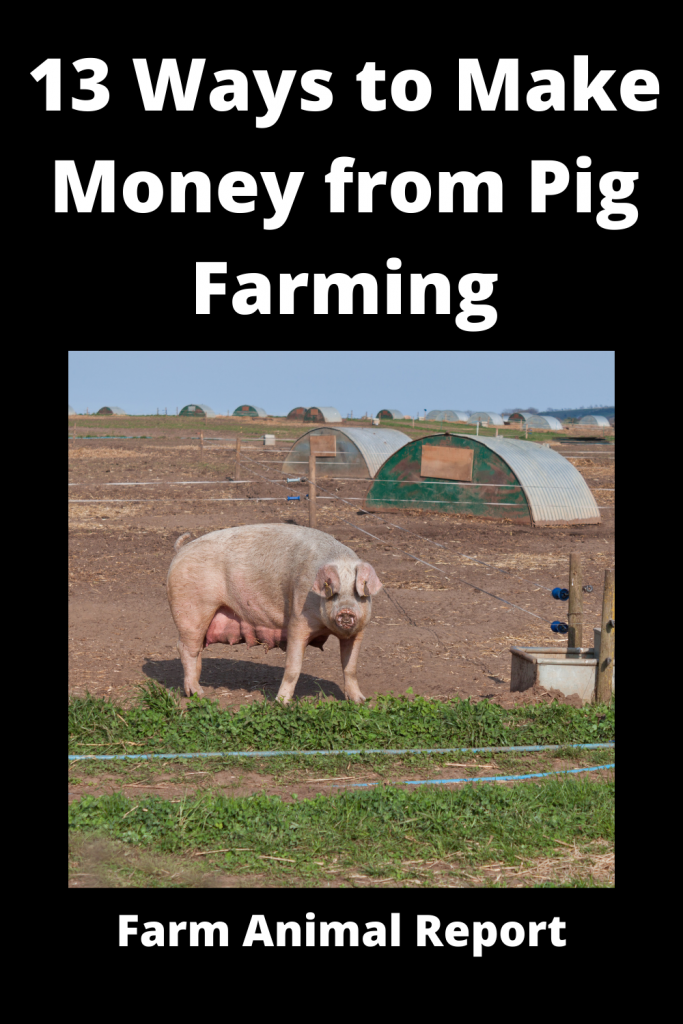 13 Ways to Make Money from Pig Farming 2