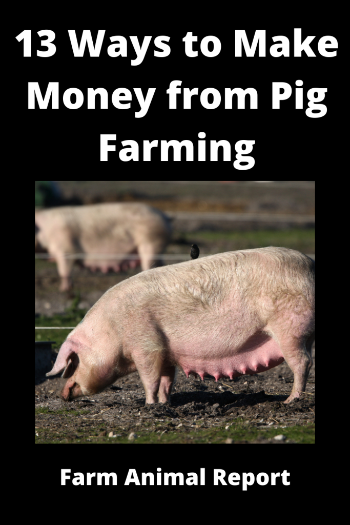 13 Ways to Make Money from Pig Farming 3