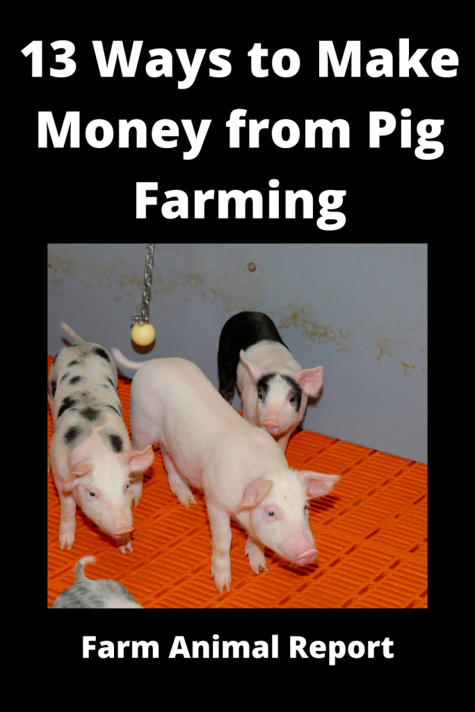 13 Ways to Make Money from Pig Farming 4