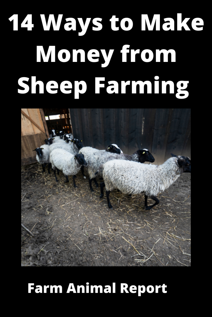 14 Ways to Make Money from Sheep Farming 4