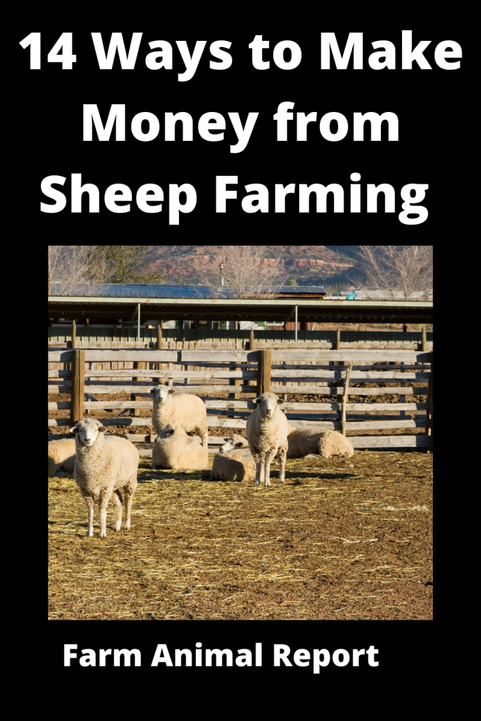 14 Ways to Make Money from Sheep Farming 1