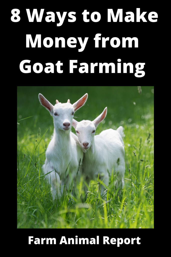 8 Ways to Make Money from Goat Farming 2