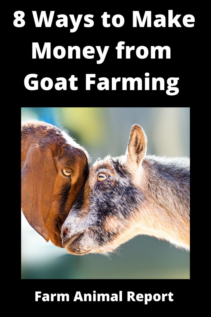 8 Ways to Make Money from Goat Farming 1