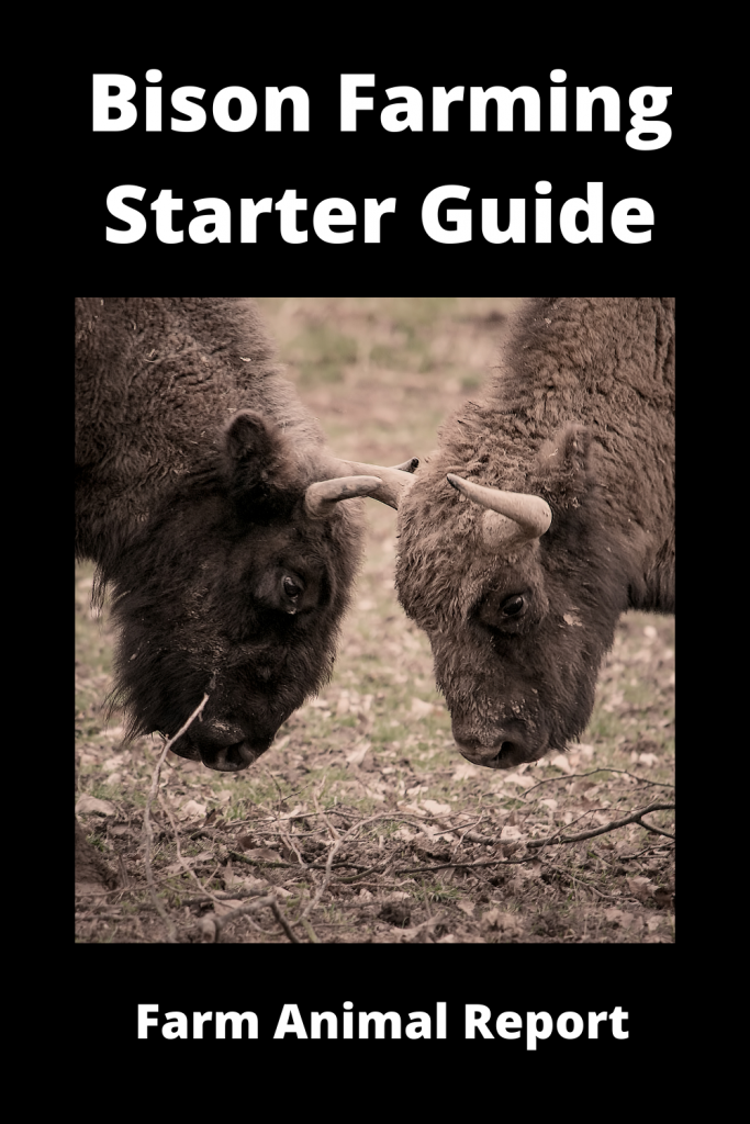 Bison Farming Starter Guide: 15 things you'll need 2