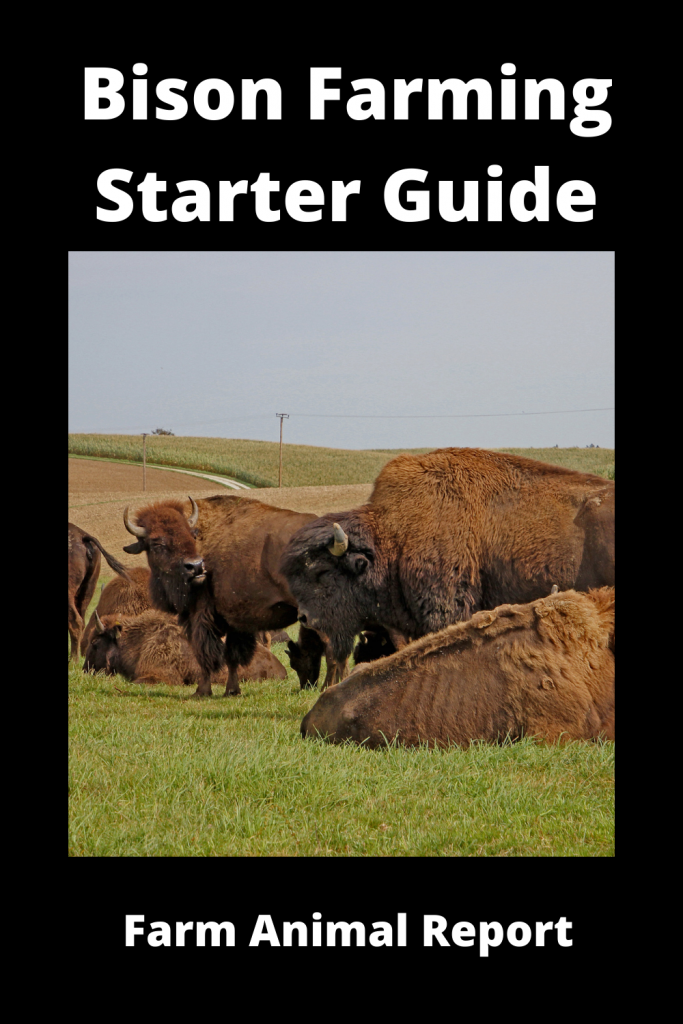 Bison Farming Starter Guide: 15 things you'll need 4