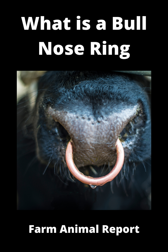What is a Bull Nose Ring Applicator 2