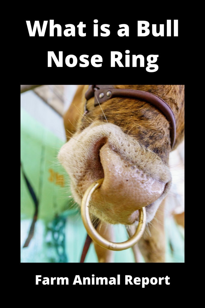 What is a Bull Nose Ring Applicator 3