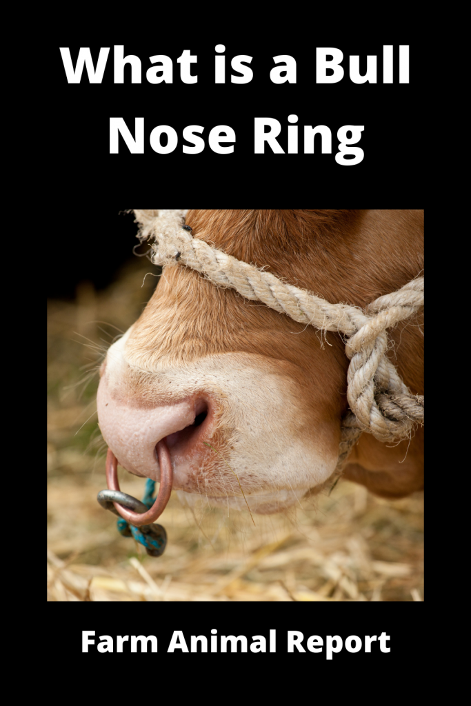 What is a Bull Nose Ring Applicator 1