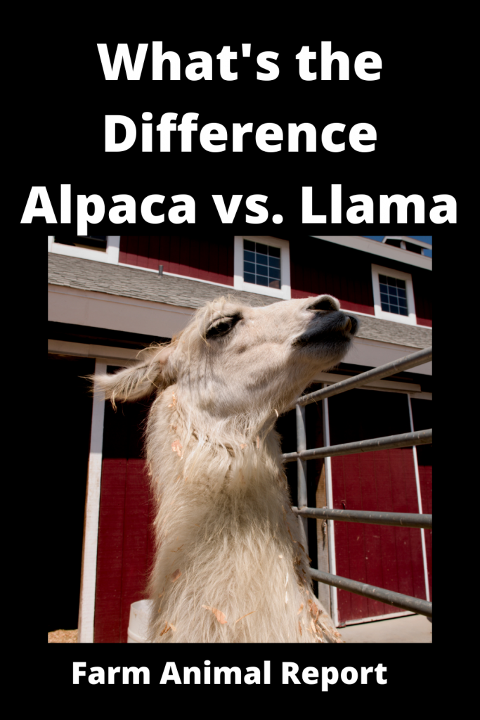What's the Difference Alpaca vs. Llama 4