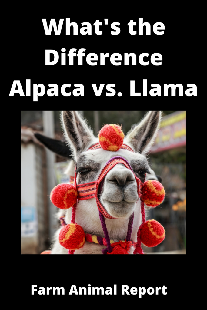 What's the Difference Alpaca vs. Llama 1