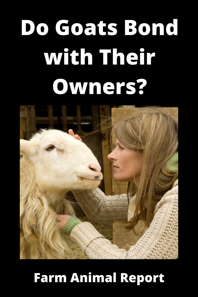 Do Goats Bond with Humans and Show Affection? 2