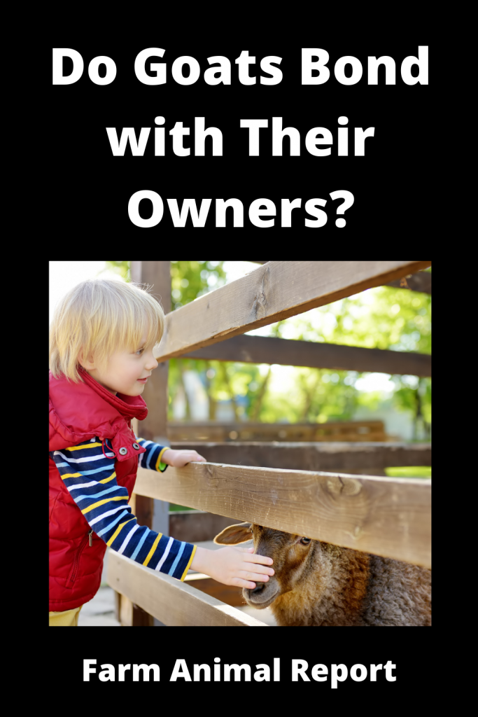 Do Goats Bond with Humans and Show Affection? 3