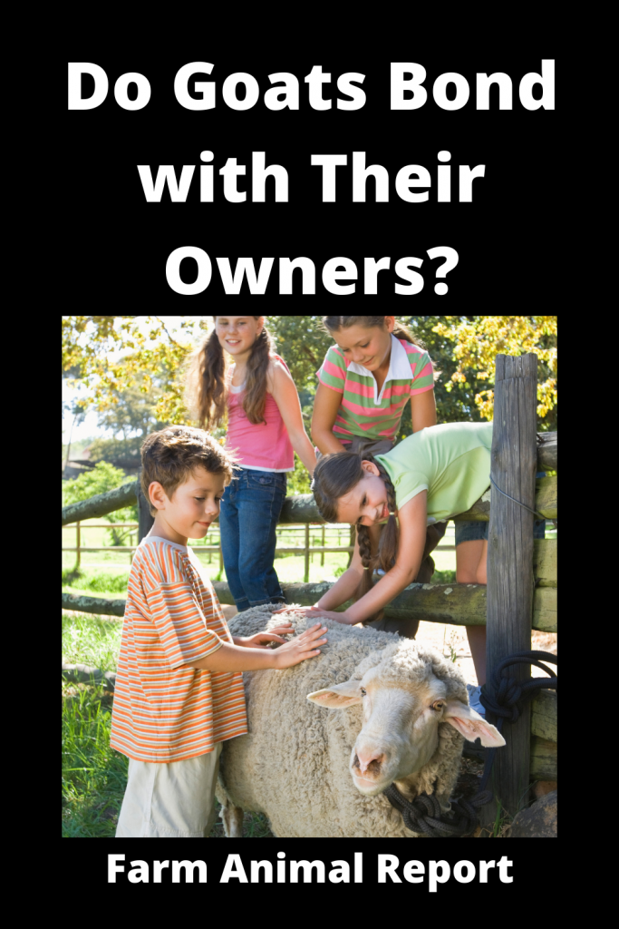 Do Goats Bond with Humans and Show Affection? 1