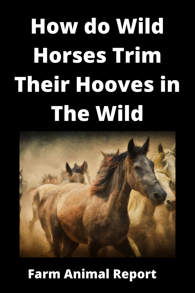How do Horses Clean / Trim their Hooves in the Wild 2