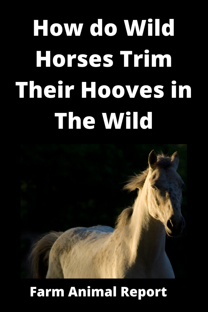 How do Horses Clean / Trim their Hooves in the Wild 3